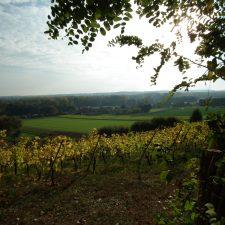 Wijngaardberg